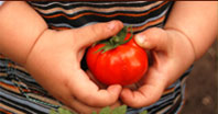 boy holding tomato